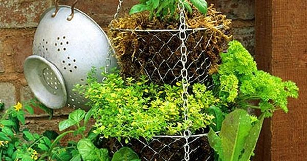 Hanging vegetable garden. I have a hanging basket like this and may
