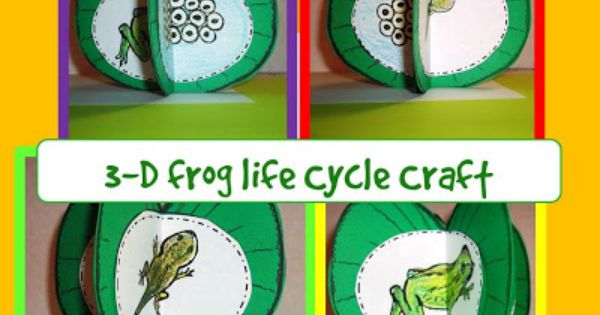 Frog Life Cycle Craft 3 D Life Cycle Of A Frog Craftivity With