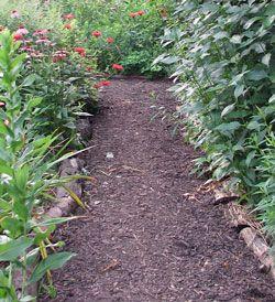 Mulched Path Amazing Gardens Habitat Garden Garden Pathway