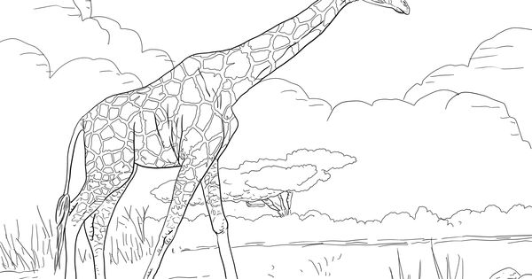 reticulated giraffe coloring page