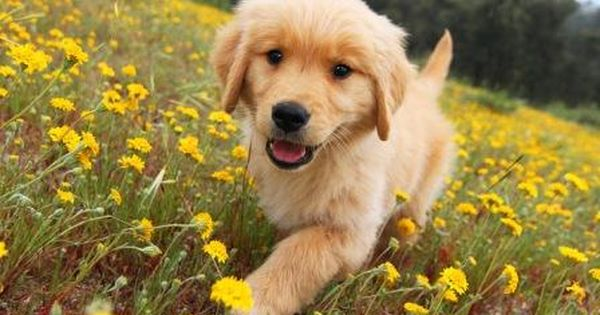 I am a happy dog in a field of flowers woo woo,