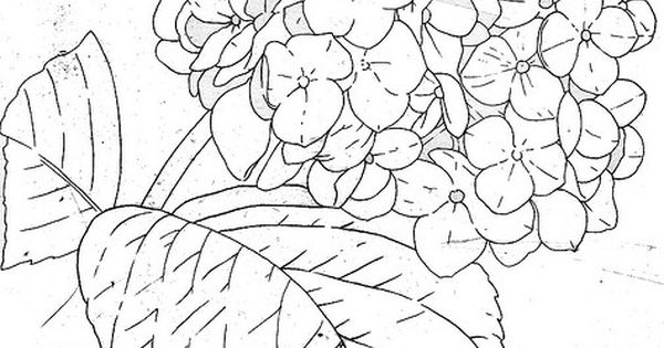Hydrangealine Hydrangea Drawings and Embroidery