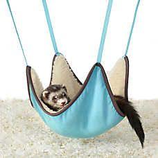 All Living Things Ferret Hammock Pet Ferret Pet Toys Cute Ferrets