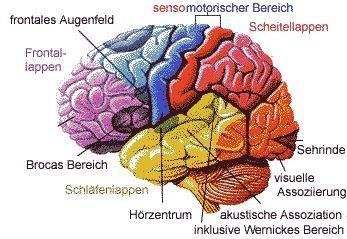 Netzwerk Gehirn Aufbau Gehirn Aufbau Anatomie Lernen Und