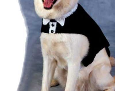 Knitting Pattern For Dogs Tuxedo : Free knit Tuxedo and Tails Dog Sweater for that special occasion For Our Fu...