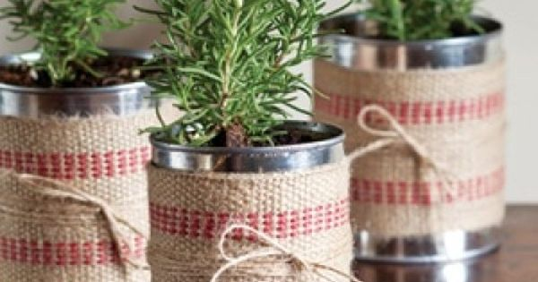 DIY Holiday Gift Plant Projects • Great Ideas and Tutorials for Plant