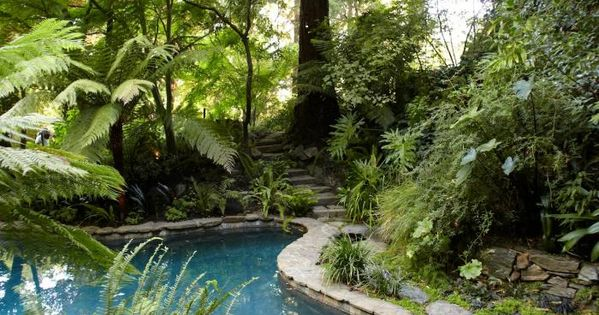 Backyard oasis | swimming pool