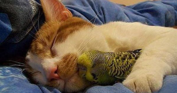 Birds And Cat Friends Yahoo Image Search Results Cute Animals