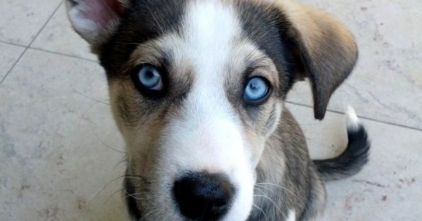 DogDate24.de – ein neues Datingportal für alle Hundefreunde