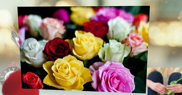 The Meaning Of Different Colored Single Rose Video Dailymotion Single Rose Flower Delivery Rose Video