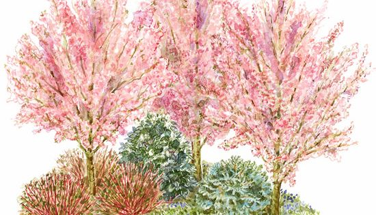 Add Privacy with Shrubs Use these colorful shrubs and shrub-sized trees to