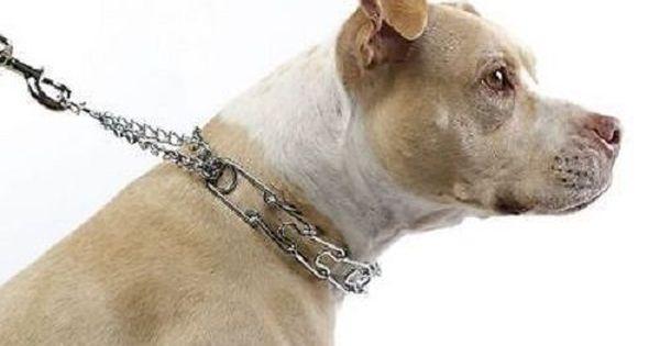 Canny Collar No Pull Dog Collar Gentle Head Halter Training
