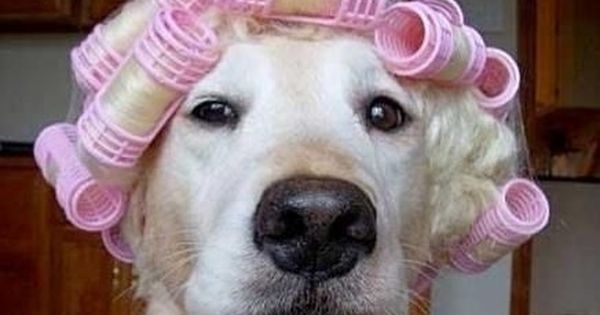 Funny Dogs Collection, Funny Cats Collection, Funny Animals, Funny Dogs, Funny Cats,