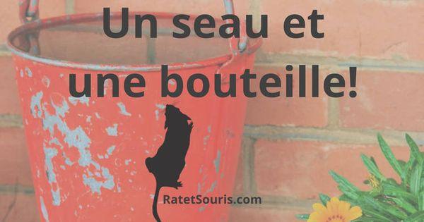 Super Idee Pour Fabriquer Un Piege A Souris Vivante Avec Un Seau Et Une Bouteille Pieges A Souris Pieges A Rats Souris
