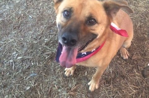Adopt Olivia On Dogs Rescue Dogs Pets