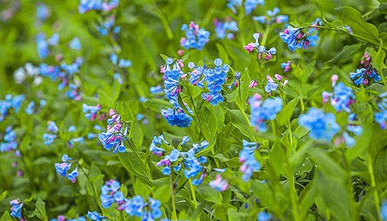 Flowering Perennials From Spring To Fall Blooming