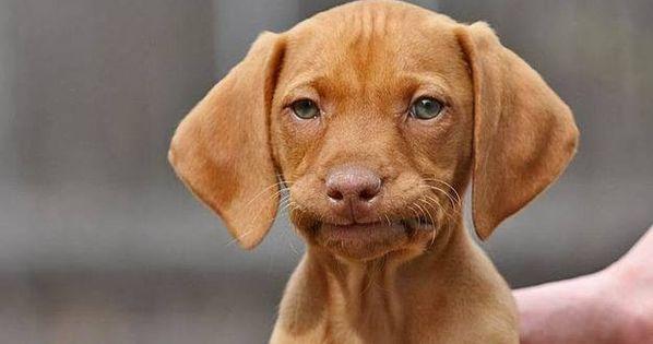 Brown dog face meme - photo#19