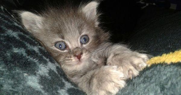 Hello Union Kitty Pets Best Pet Insurance Cat Insurance