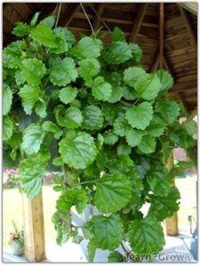 Great Hanging Houseplants Gardening Low Light House Plants Plants Household Plants