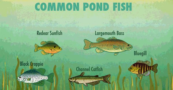Small pond fishing tips small ponds and fish for Small pond fishing