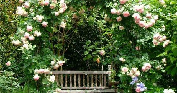 Rosen kletterpflanzen kleingarten anlegen sichtschutz - Kleingarten anlegen ...