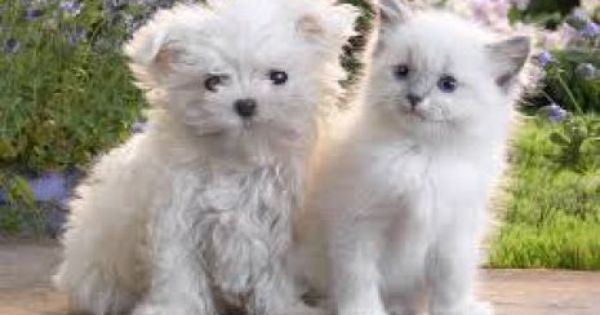 Why Having A Dog Or Cat Has A Deep Spiritual Meaning Zvirata