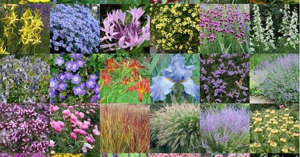 30 vaste planten voor een droge en zonnige border garden ideas gardening plants flowers - Foto droge tuin ...