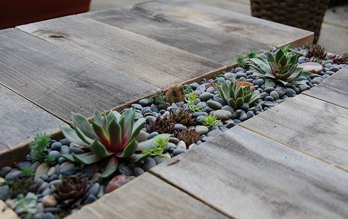 DIY succulent table. The table is of small dimensions and is made