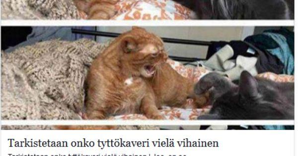 Https Www Facebook Com Kaljamies35http Www Riemurasia Net Kuva Tarkistetaan Onko Tyttokaveri Viela Vihainen 166832 Hauskat Elainkuvat Kitties Kissa
