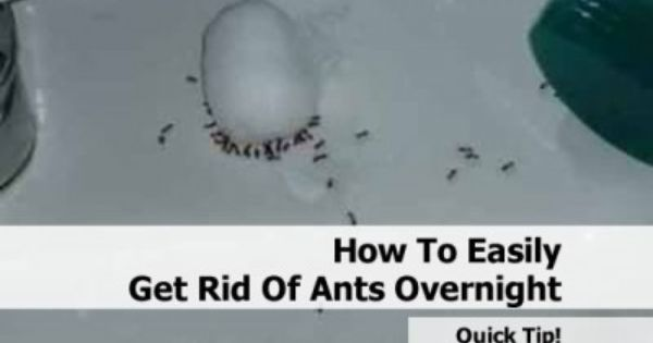 how to easily get rid of ants overnight mix 1 cup of warm water with 1 2 cup of sugar and 2. Black Bedroom Furniture Sets. Home Design Ideas
