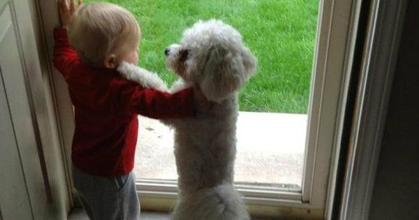 Aww.. This is so cute Dog's best friend - LOVE