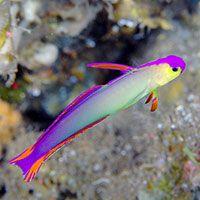 10 Best Saltwater Aquarium Fish For Beginners Home Aquaria