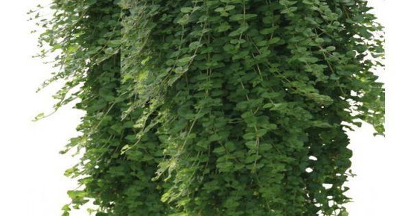 Plante balcon et terrasse terrasses balcons plantes for Plante annuelle