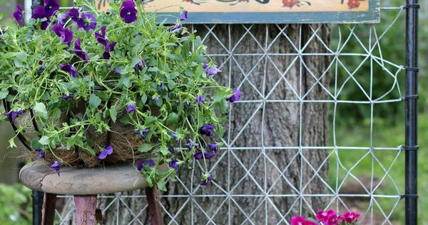 Old garden gate with potted flowers in June garden