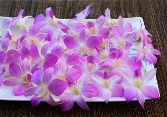 Flower Orchid Pastel Lavender White Edible Flowers Edible Orchids