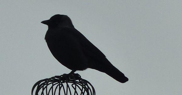 Het silhouet van de vogel zegt alleen iets over de buitenkant niets over de binnenkant door - Deco buitenkant idee ...