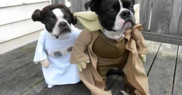 Happy Halloween From Darth Vader Princess Leia And Yoda