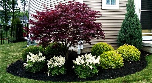 Corner Tree Surround With Astilbe Spirea And More