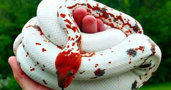 Lecture D Un Message Mail Orange Serpent Animal Animaux