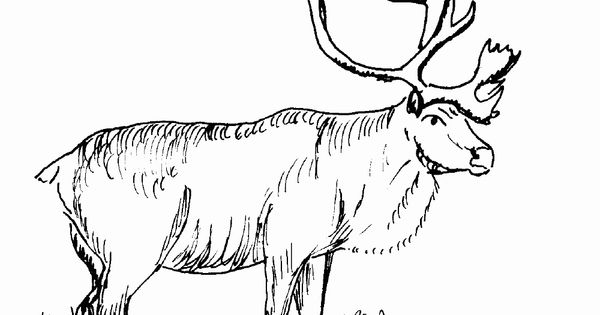 elk coloring page Woodburning