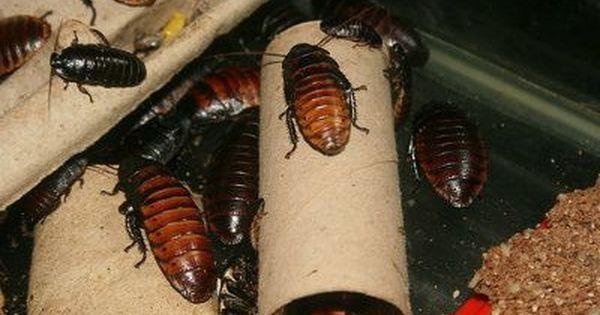 Como Acabar Con Las Termitas En La Pared Remedios Caseros Contra Las Cucarachas Remedios Caseros
