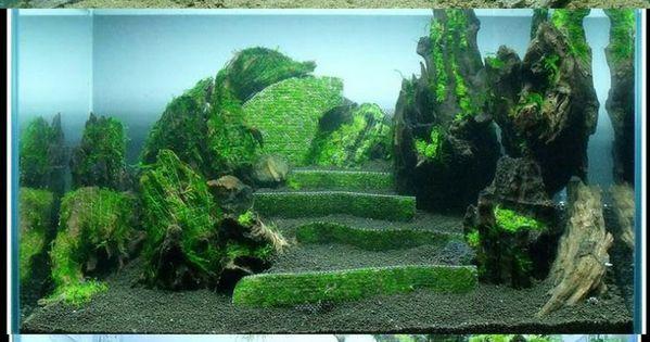Decorazioni acquario originali 11 planted aquarium for Decorazioni acquario