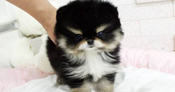 Free Pet Classifieds Ads Buy And Sell For Free Puppies And