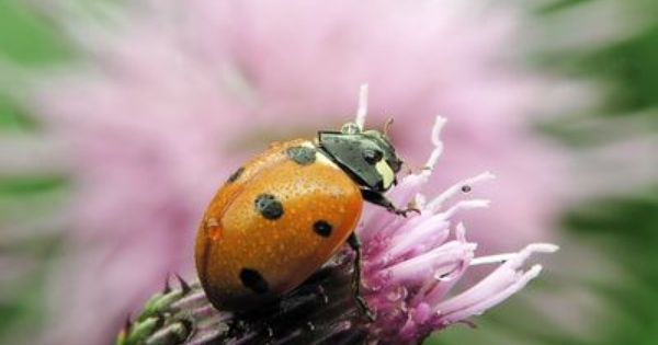 How To Get Rid Of Asian Beetles In House
