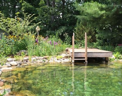 Natural swimming pool ponds nsp 39 s are a chemical free for Natural pond maintenance