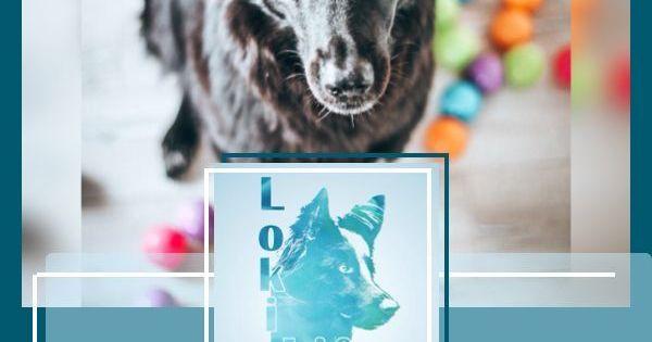 7 Tipps Wie Ihr Die Futterung Zu Einem Abenteuer Macht Und Gleichzeitig Die Bindung Starkt Bindung Hundeerziehung Tipps H Hunde Futter Hunde Hundeverhalten