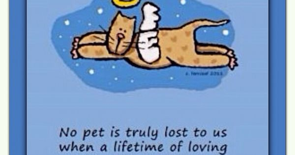 No pet is truly lost to us . . . Cat Angel | Cat-Themed ...