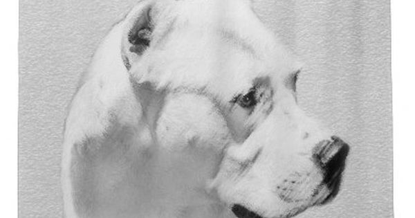 Dogo Argentino Painting Original Dog Art Shower Curtain Zazzle Com Mastiff Breeds Giant Dog Breeds Mastiff Puppies