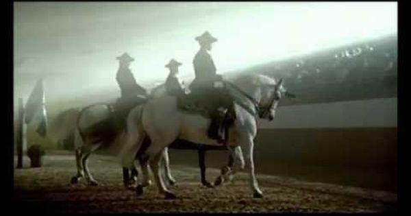 Espectaculo Horse Love Horses Animals
