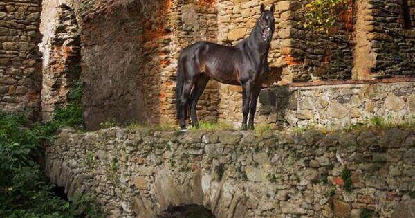 Warmblood Stallion By Katarzyna Okrzesik Http Www Photo Equine Com Gallery Select By Topics Fantasy Horses Pretty Horses Beautiful Horses